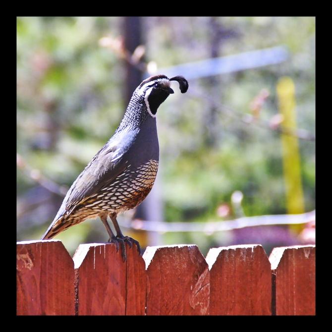 birdingrid
