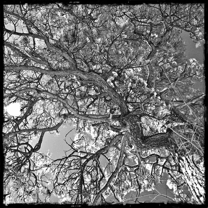 treehagrid