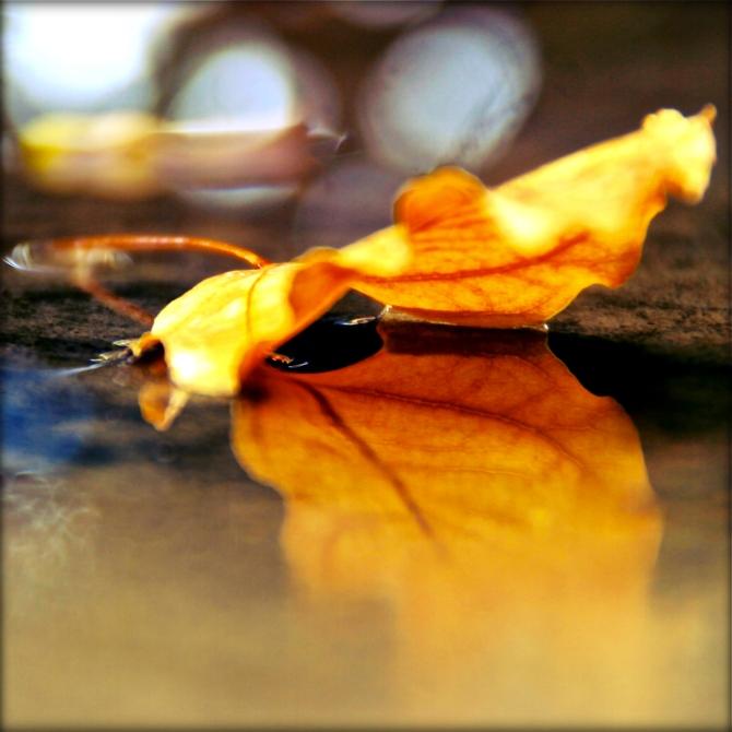 leafanne