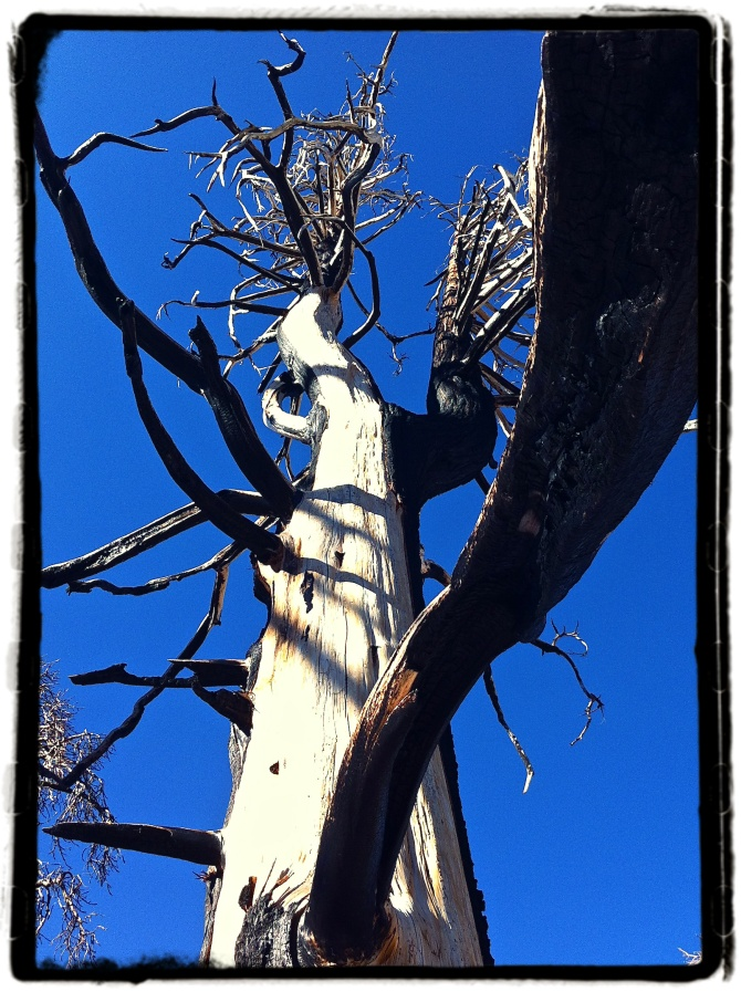 treesanna