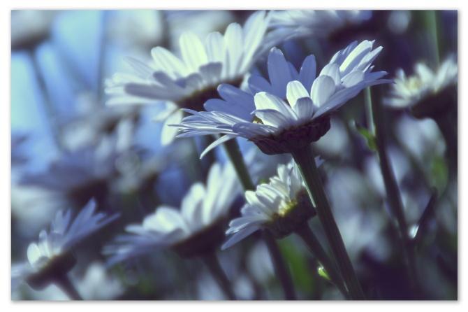 whiteflowerjanine