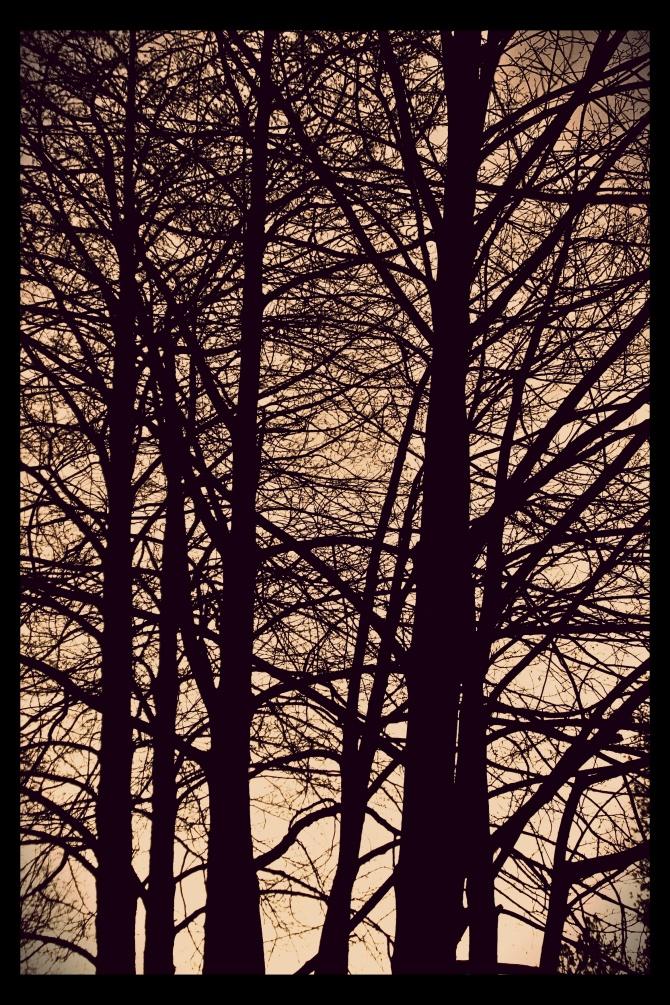 treecarl