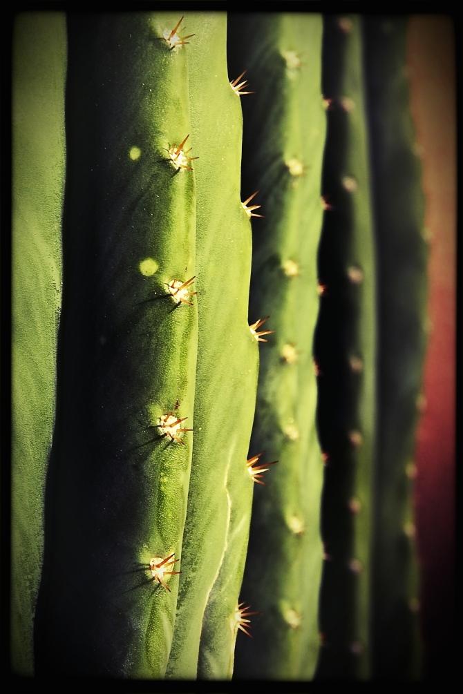 cactusst