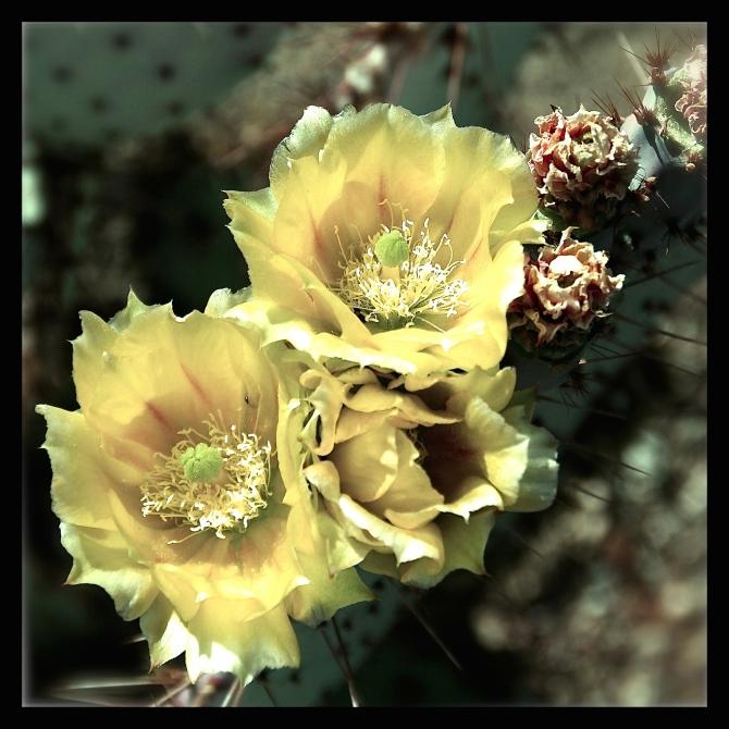 yellowblk.jpg