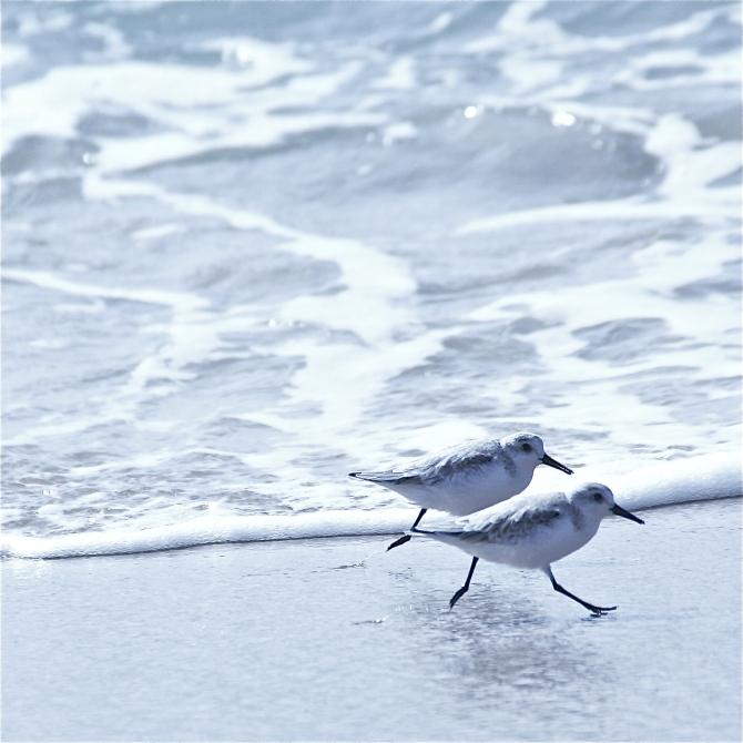 birds.jpg 2