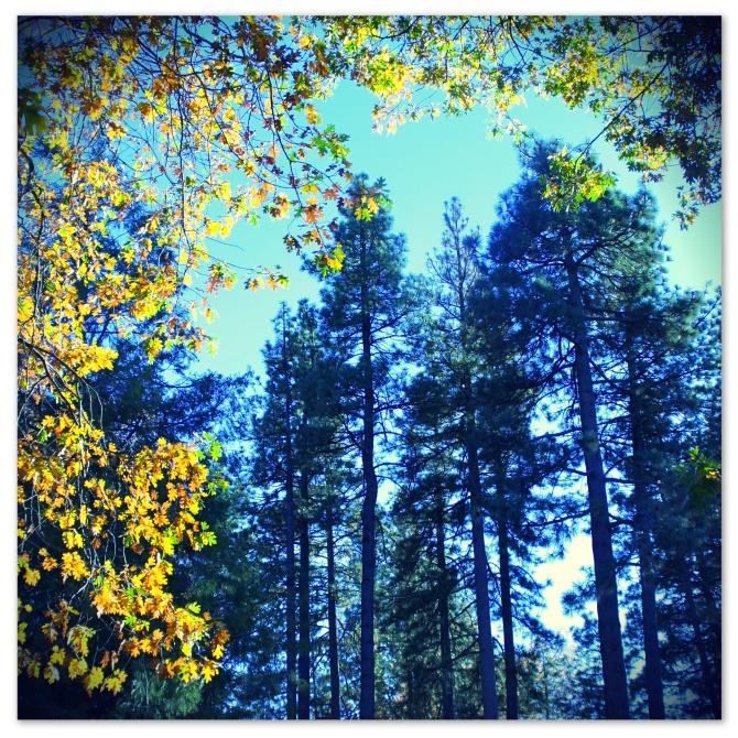 treessophia