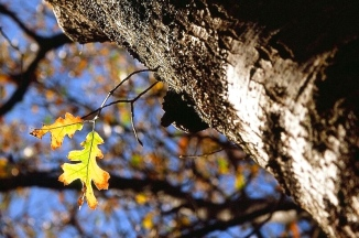 autumn-leaves-4jpg