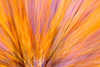 autumn-abstract-3