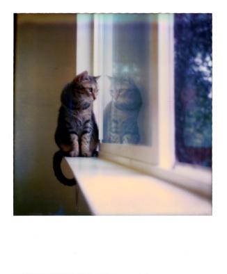 cat-window-polaroid-2