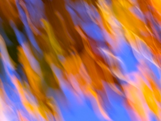 Falling-leaves-abstract-2